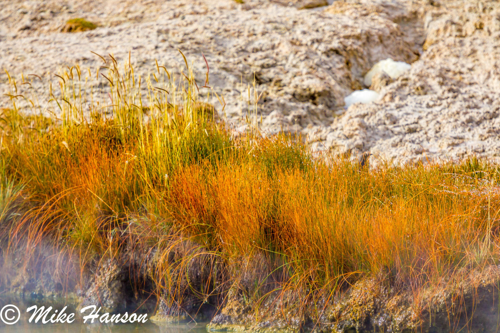 Fall colors in gesyer basin