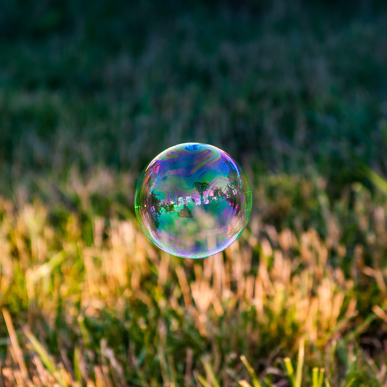 Soap Bubble Hovering Over Grass