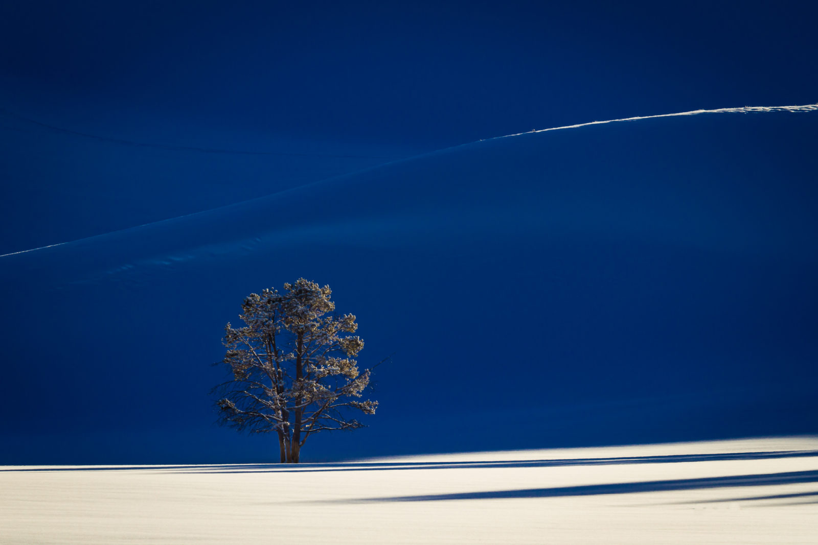 Solitary tree in Yellowstone