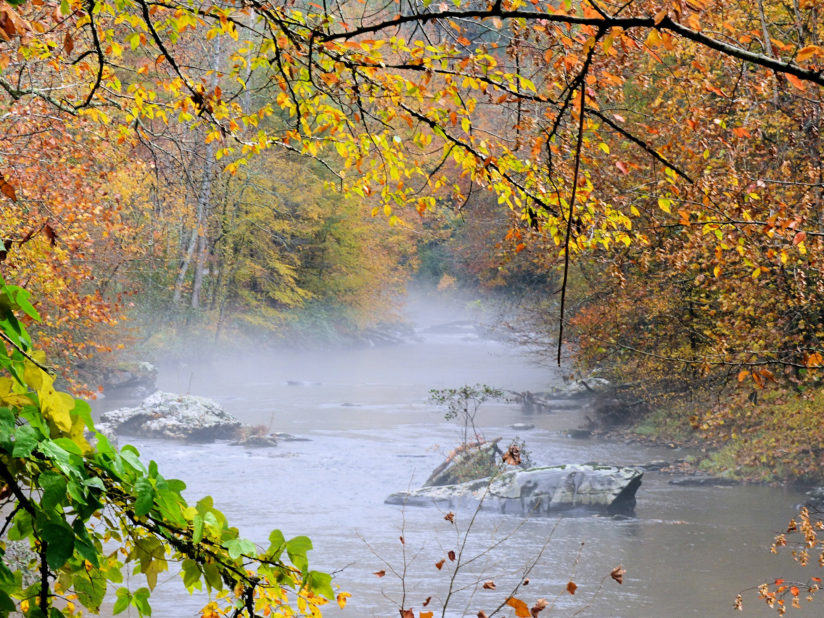 Fog on Tellico River