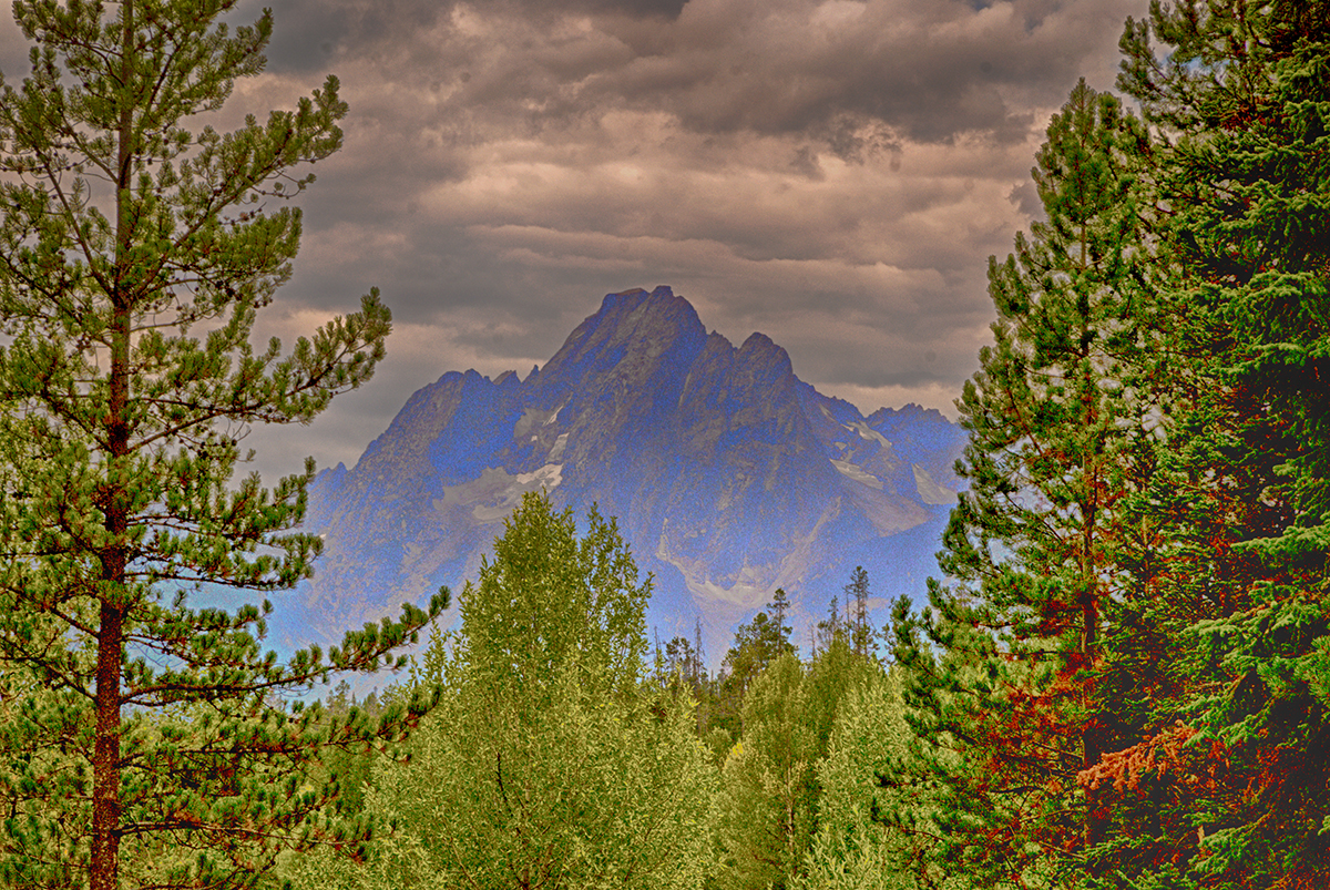 The Grand Tetons through the Trees
