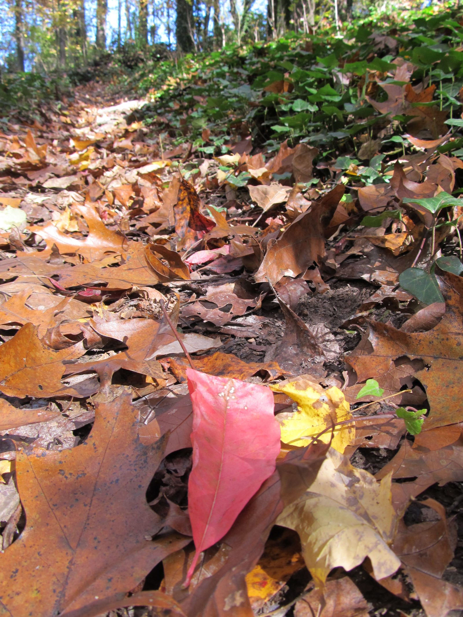 Path of Leaves