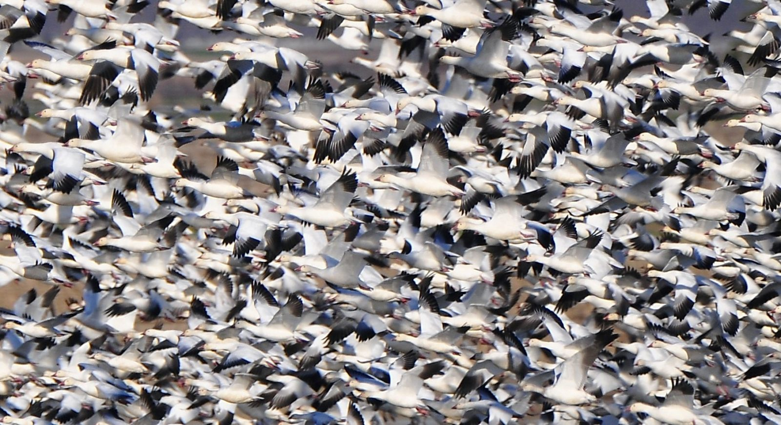 Sutter Bird Sanctuary-Rush Hour