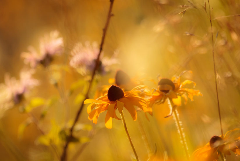 Bokeh of Wildflowers