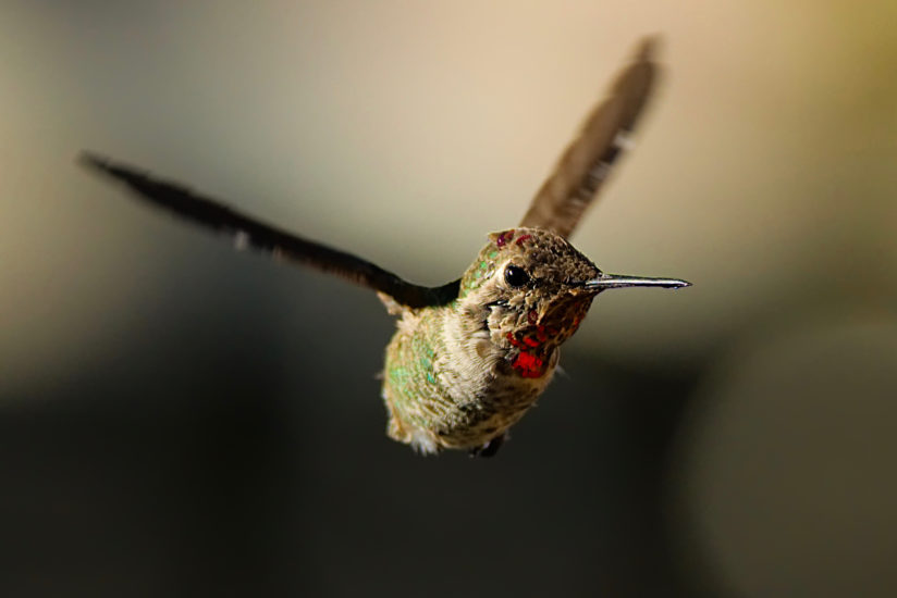 Flight of the Hummingbird