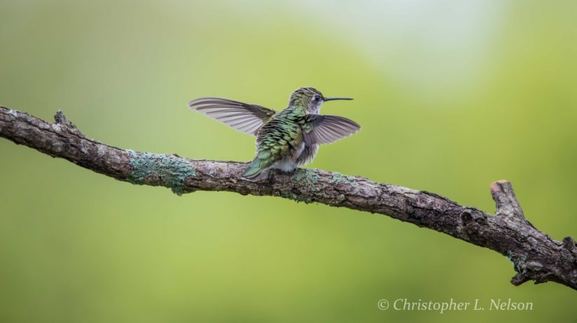 Hummingbird Yoga