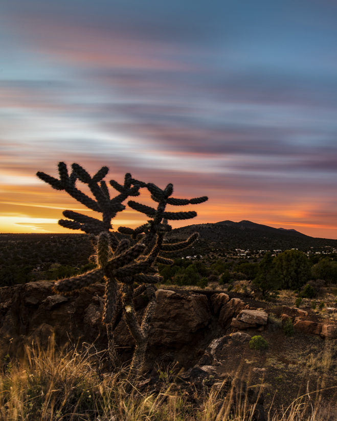 A cholla's sunset view