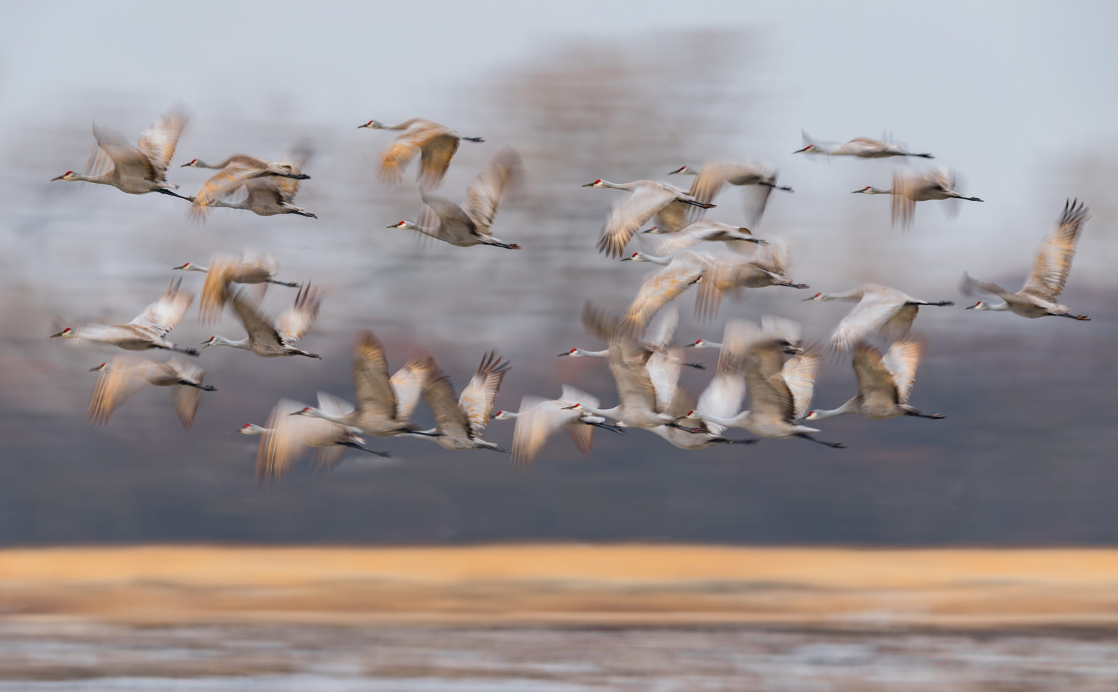 Spring Migration of Sandhill Cranes