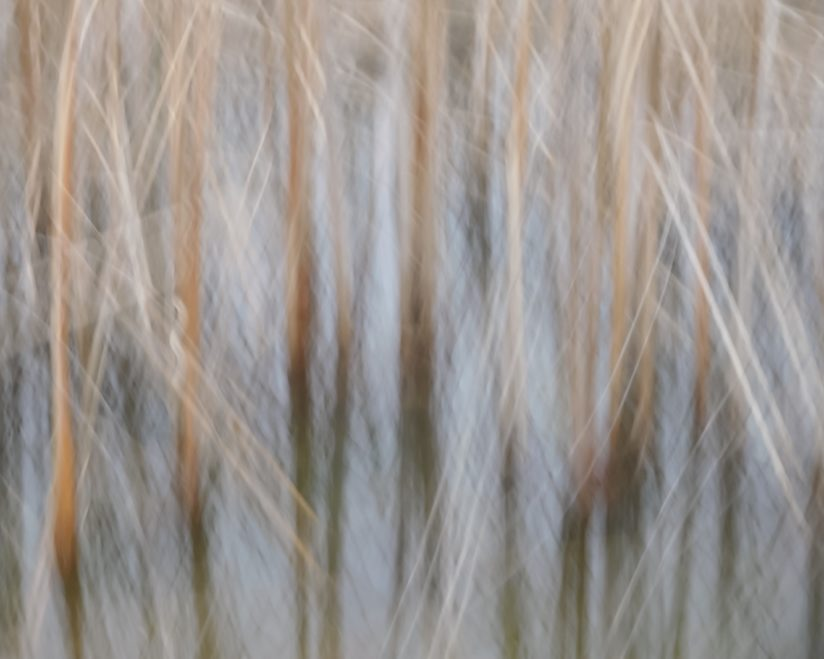 Cattail Abstraction
