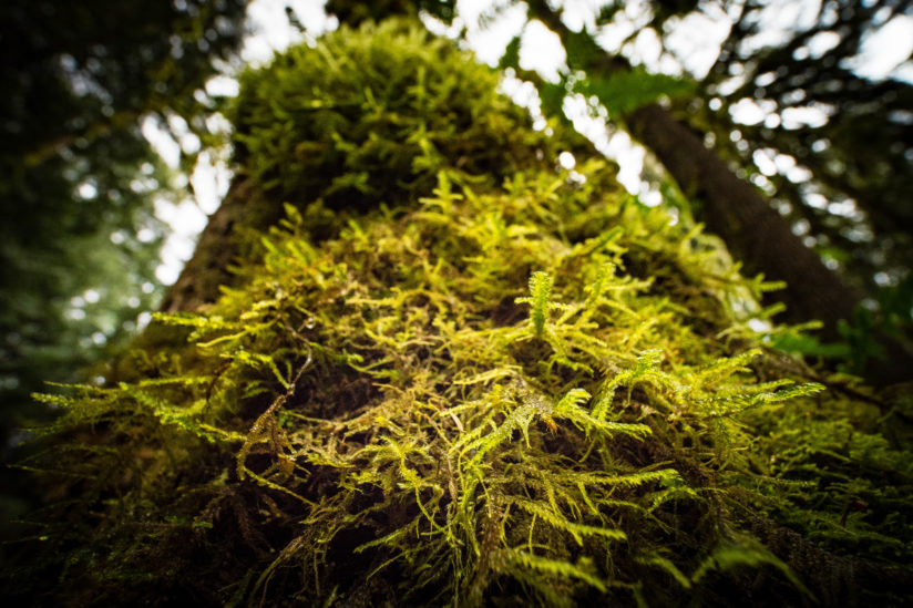 Moss – Redmond Watershed
