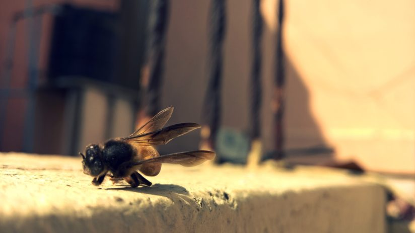 Death of a bee.