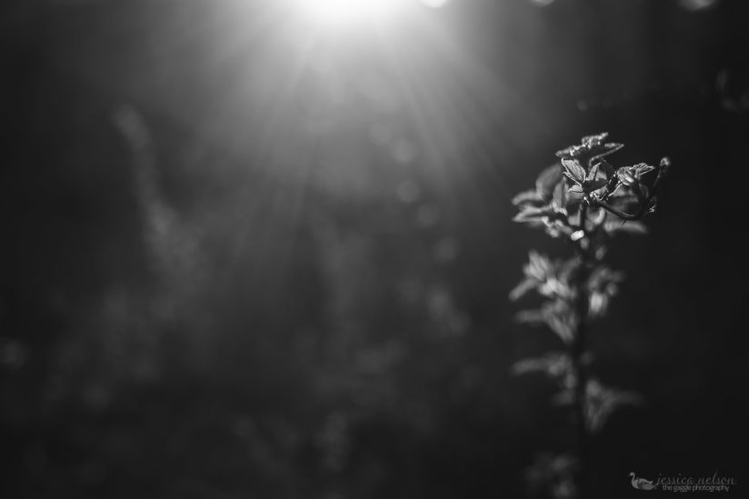 Freelensing with Weeds