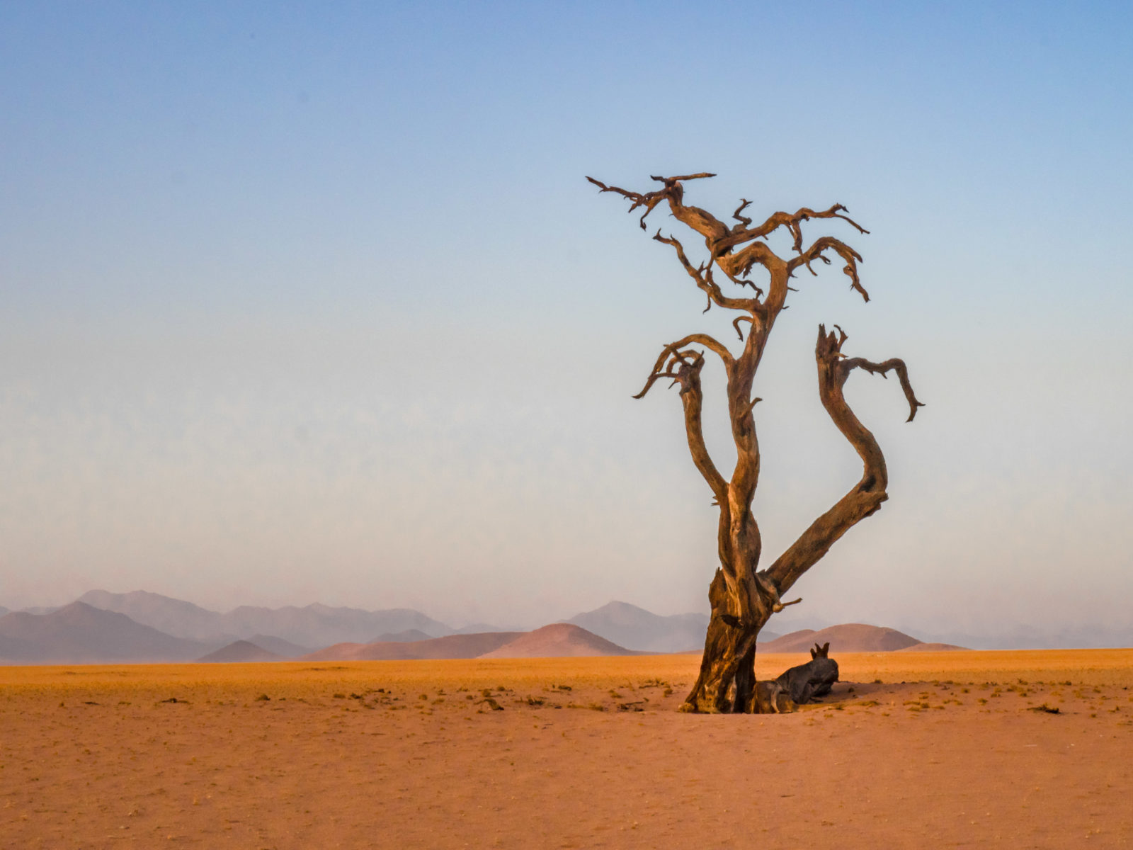 Dead tree at Sossusvlei