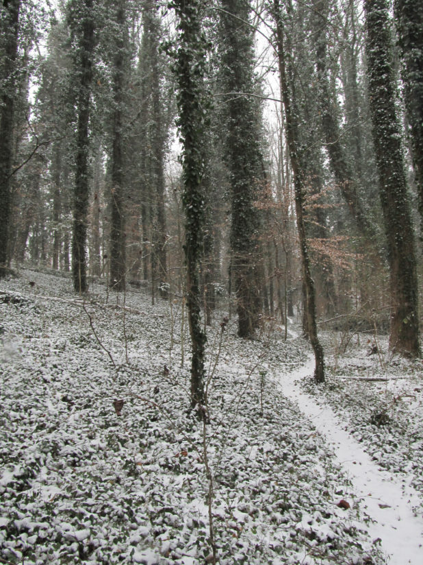 The Greenway in Snow