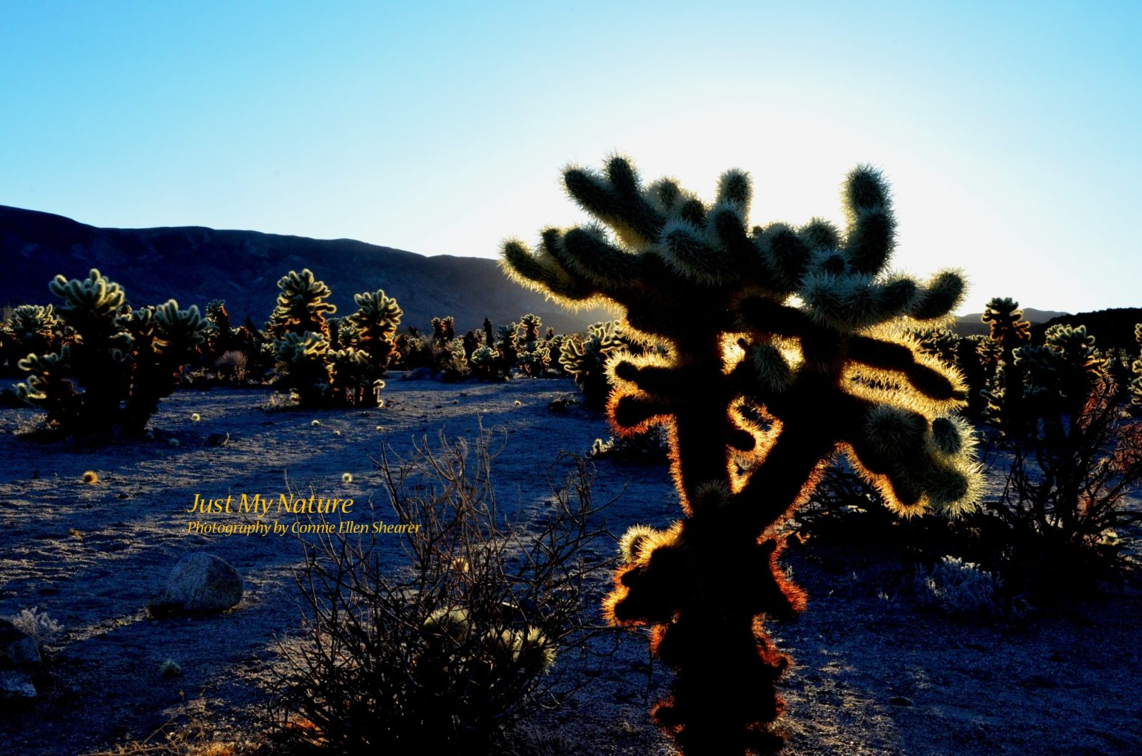 A Prickly Sunset