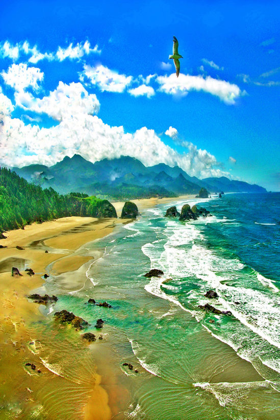 Soaring Oregon's Scenic Coast