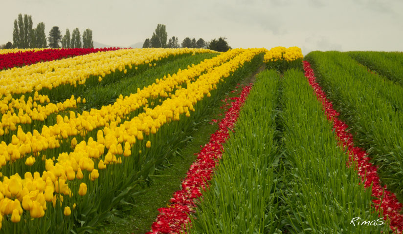 fields of color