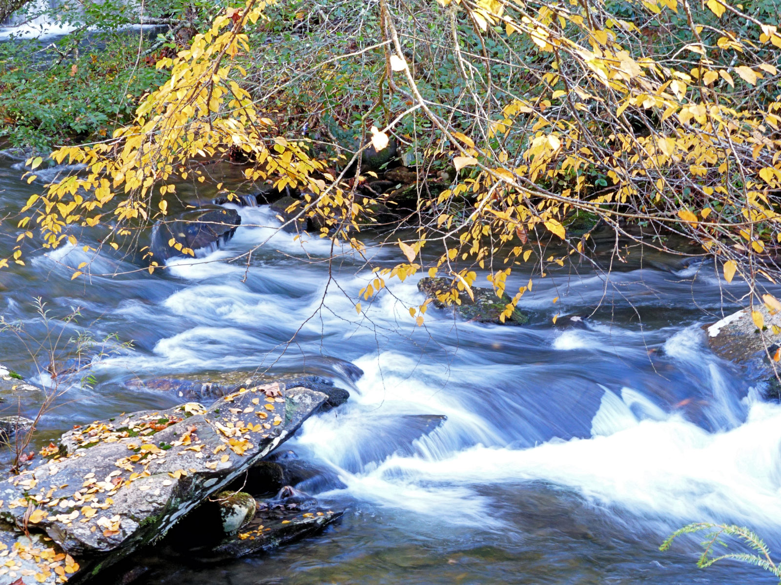 Tellico River framed by golden leaves