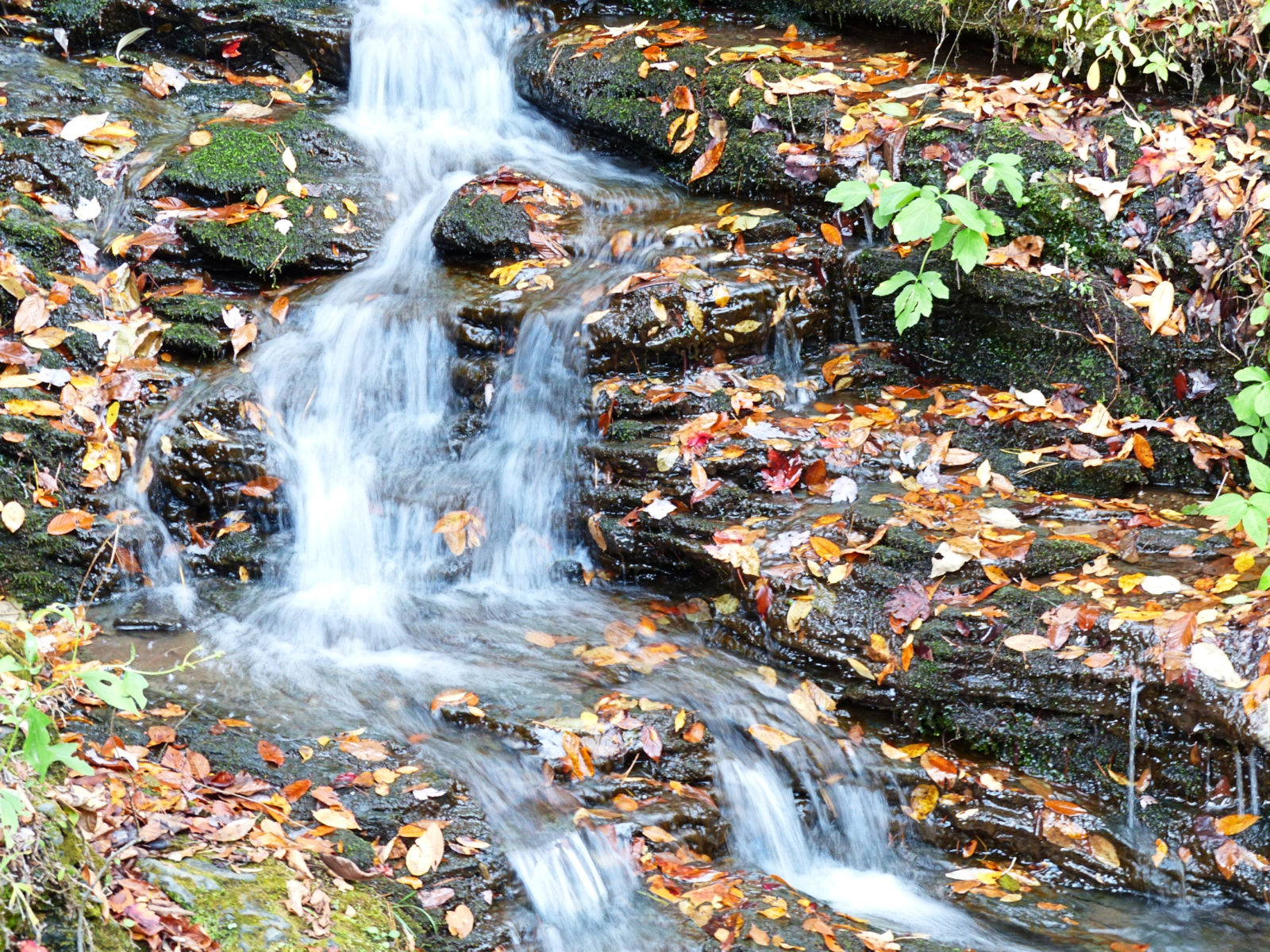 Mini falls in Cherokee National Forest