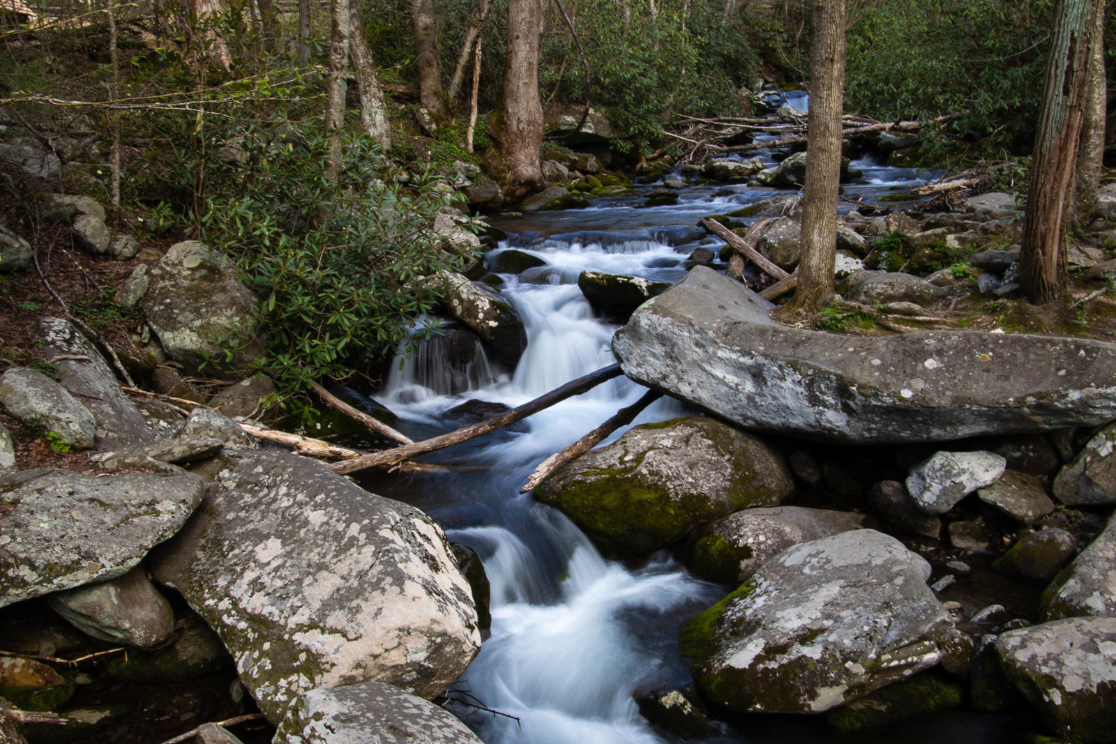 Spring Flow in the Smoky Mountains