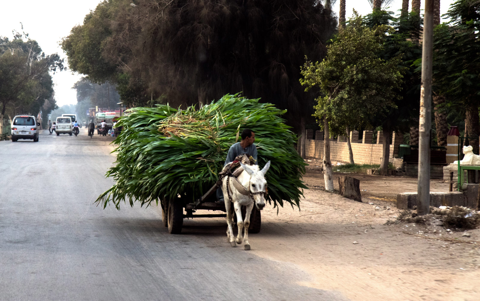 Going to Market