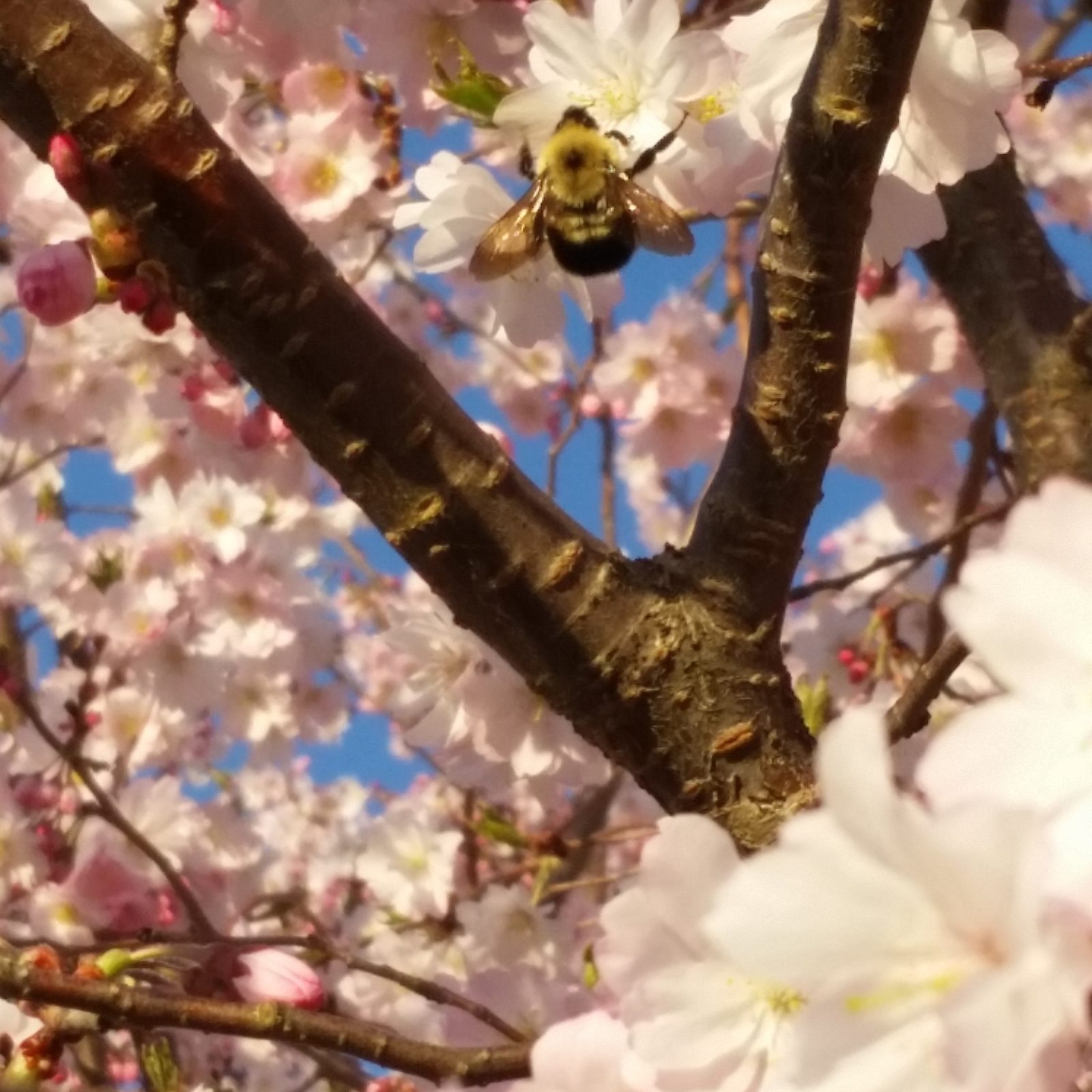 Buzzy Bumbles in Cherry