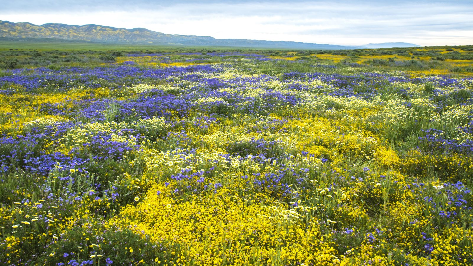 Super Bloom!