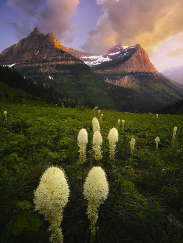 Beargrass season