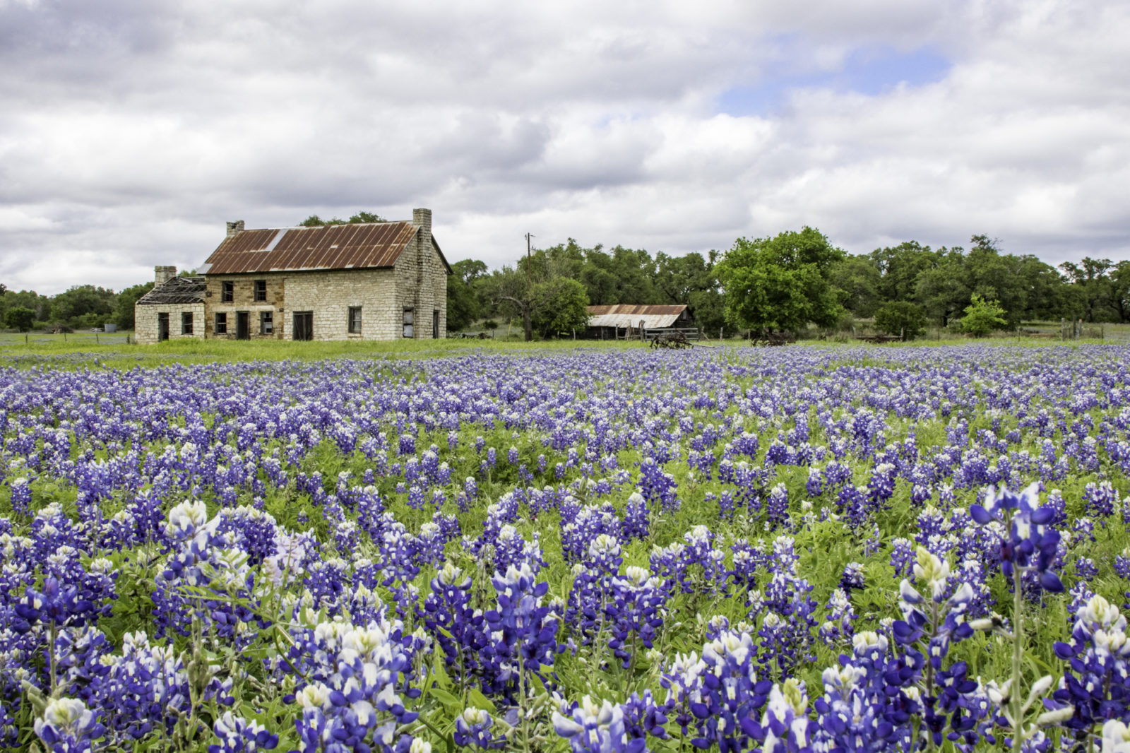 Old stone house surrounded by Texas Bluebonnet wildflowers