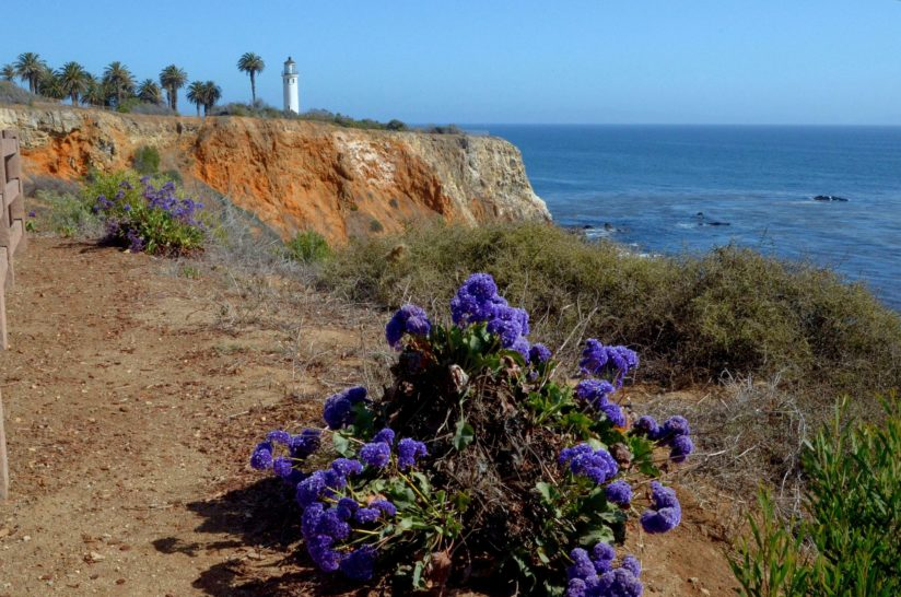 The Limonium and The Lighthouse