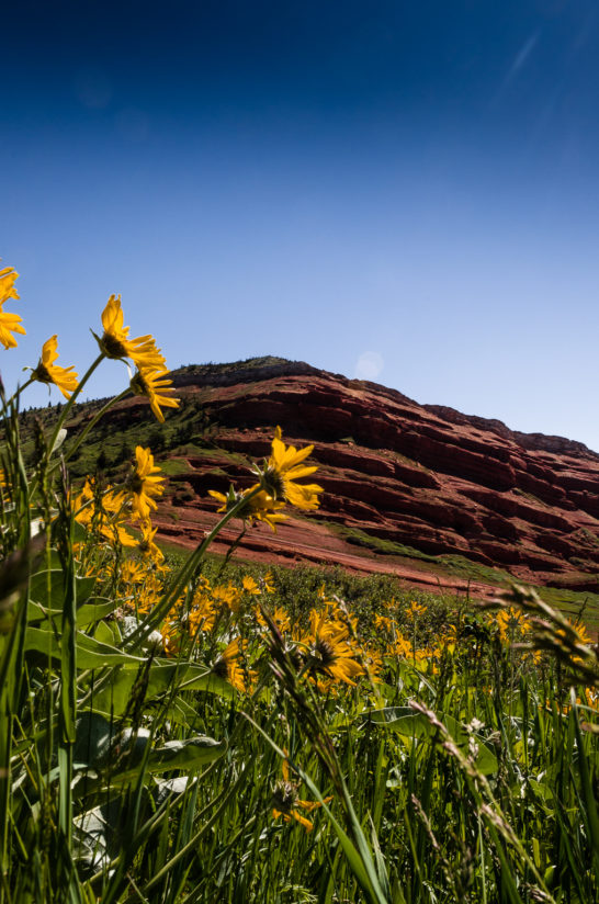Balsam Root and Red Bluff