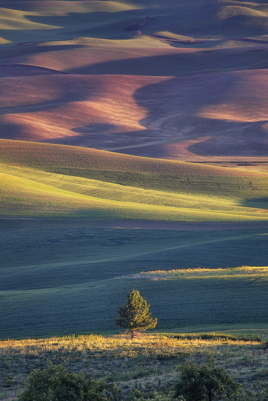 Morning Light at the Palouse