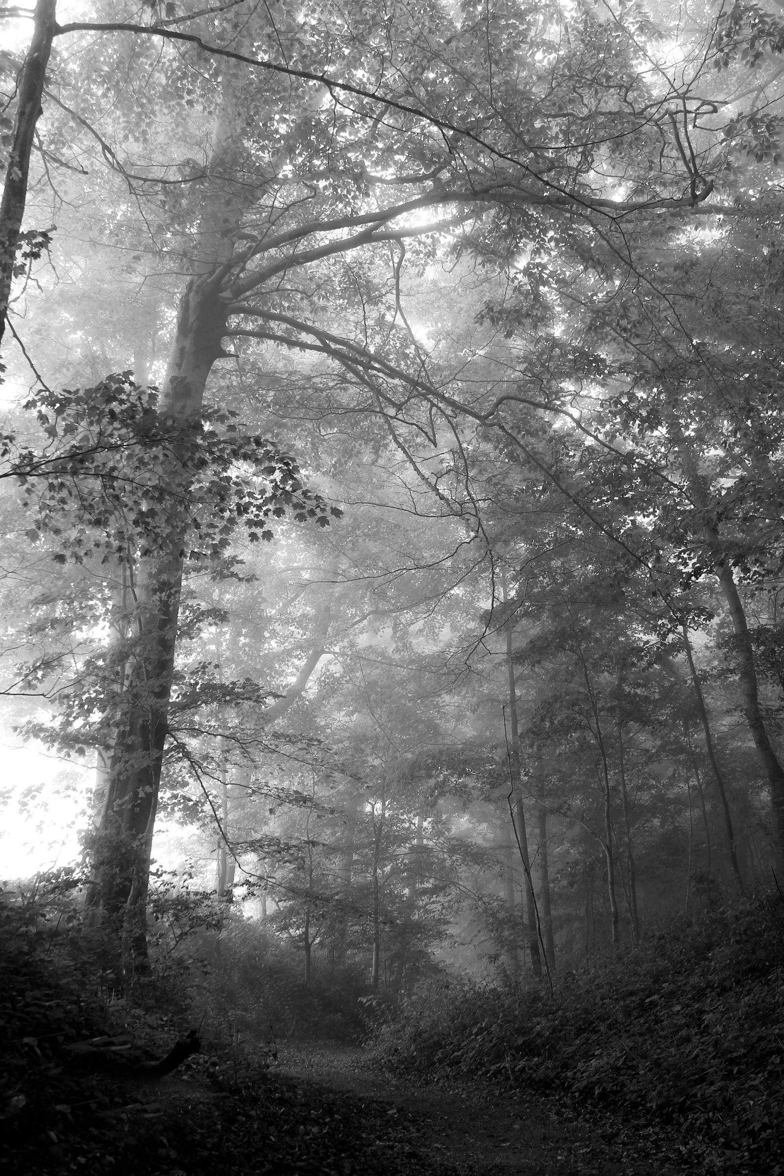 Lake shore fog in the woods