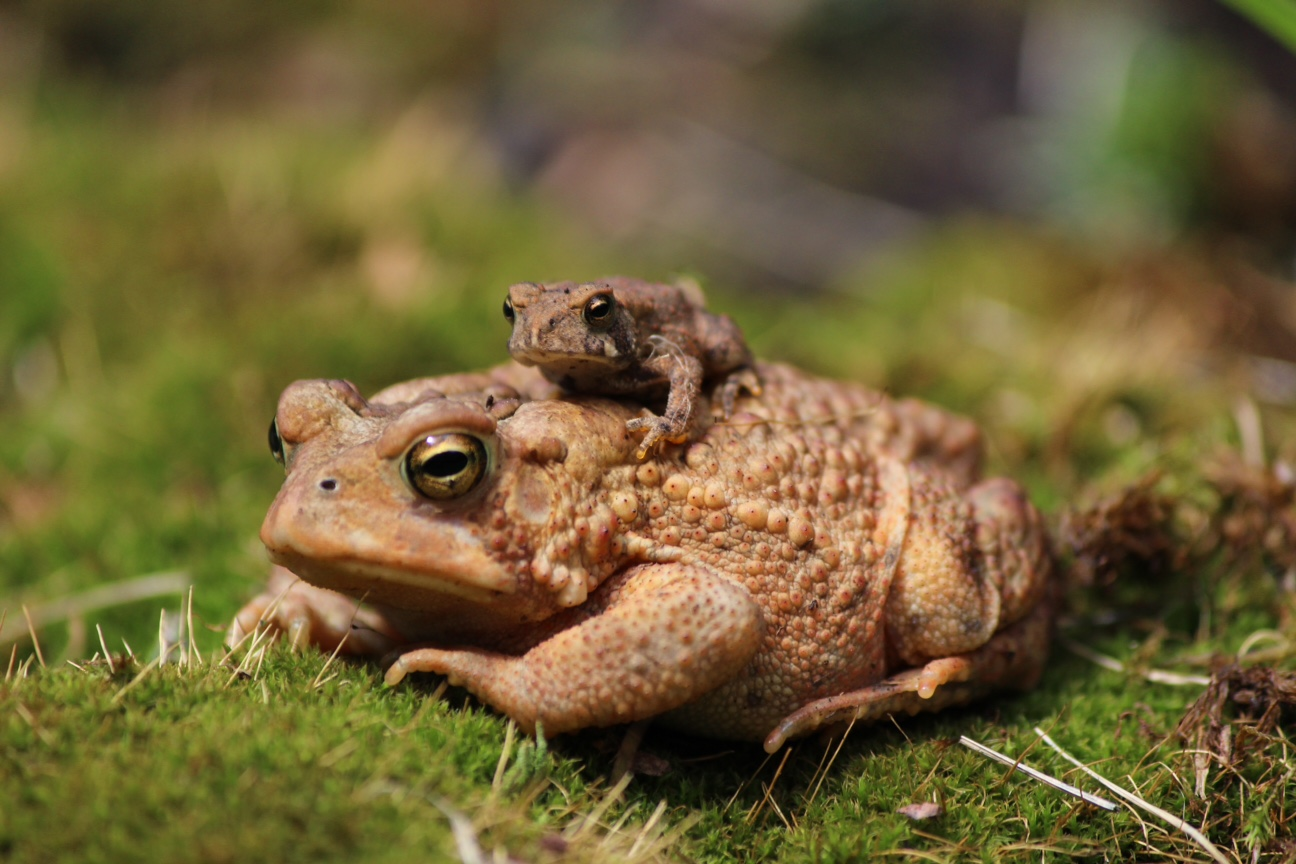 Toad Towed