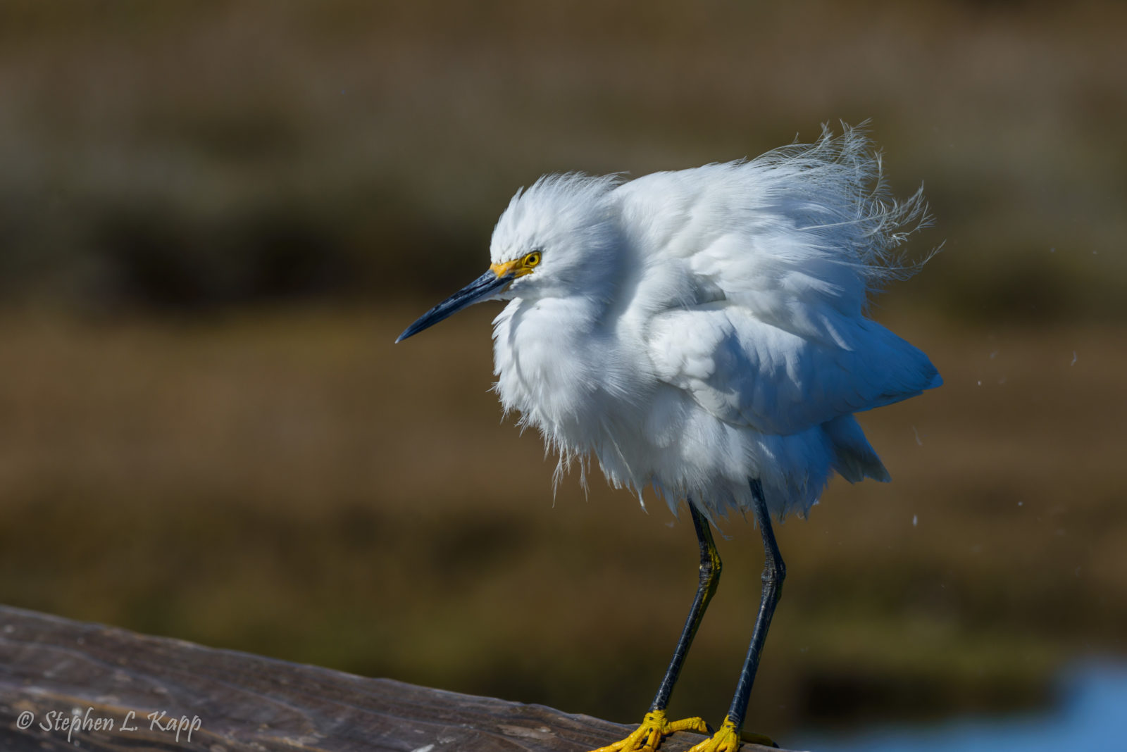 """Darn Wind – It's Giving Me a Bad Hair Day Here"""