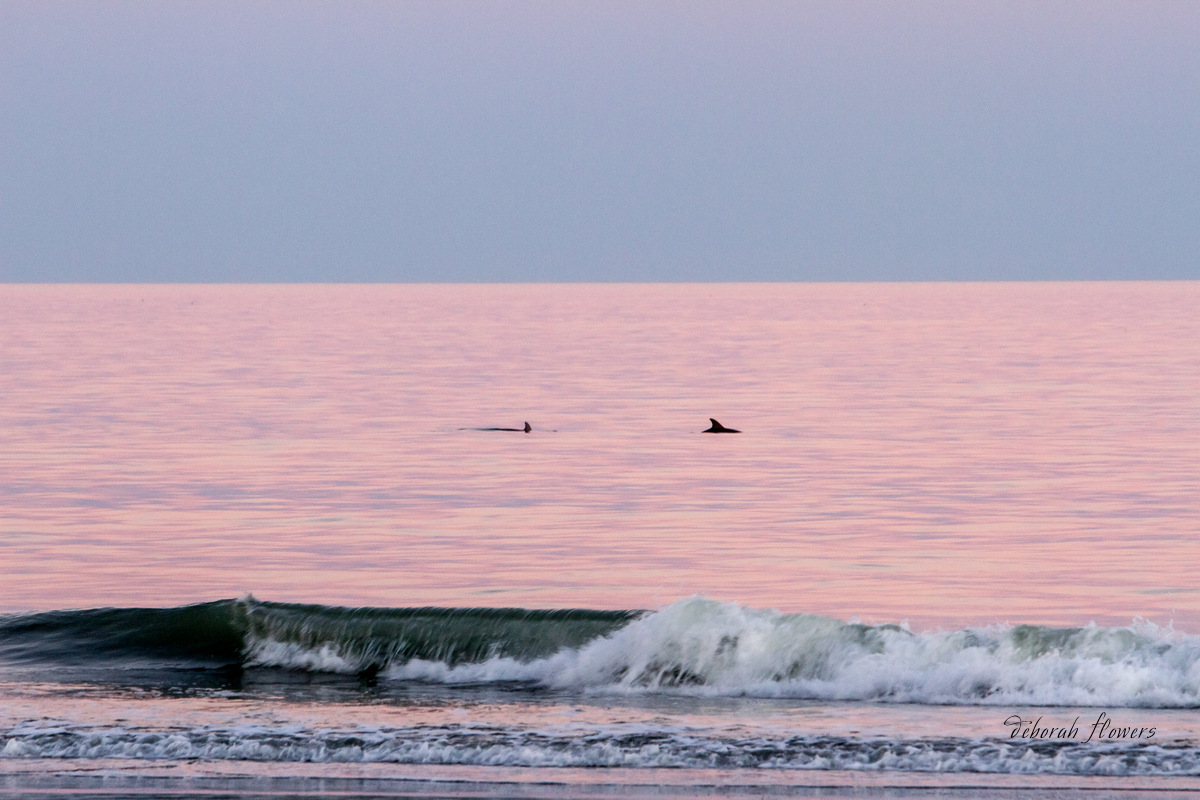 Dolphins at Sundown