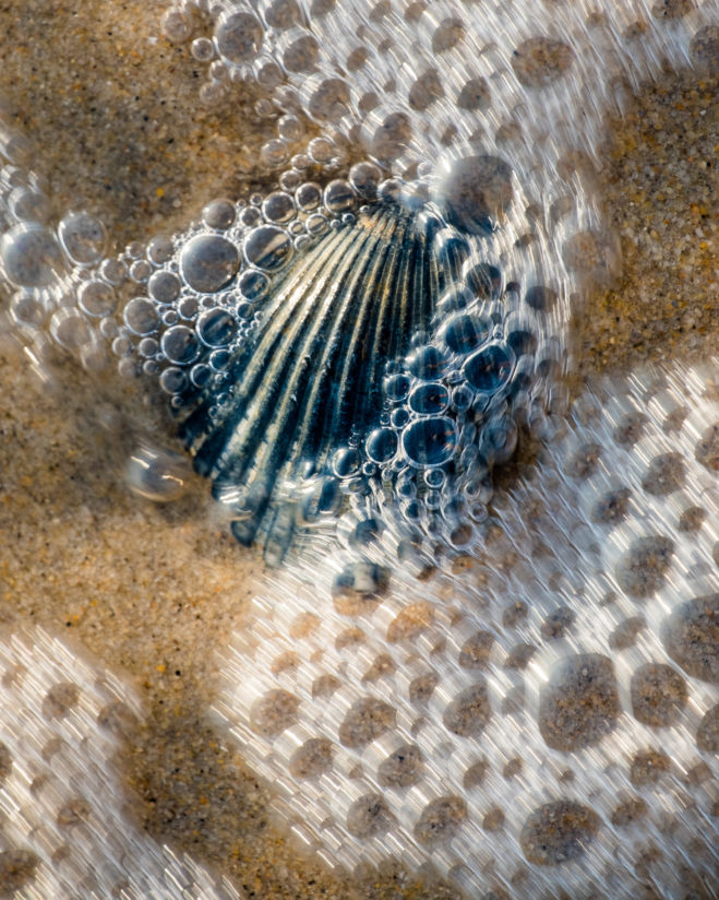 Shell amidst the retreating bubbles
