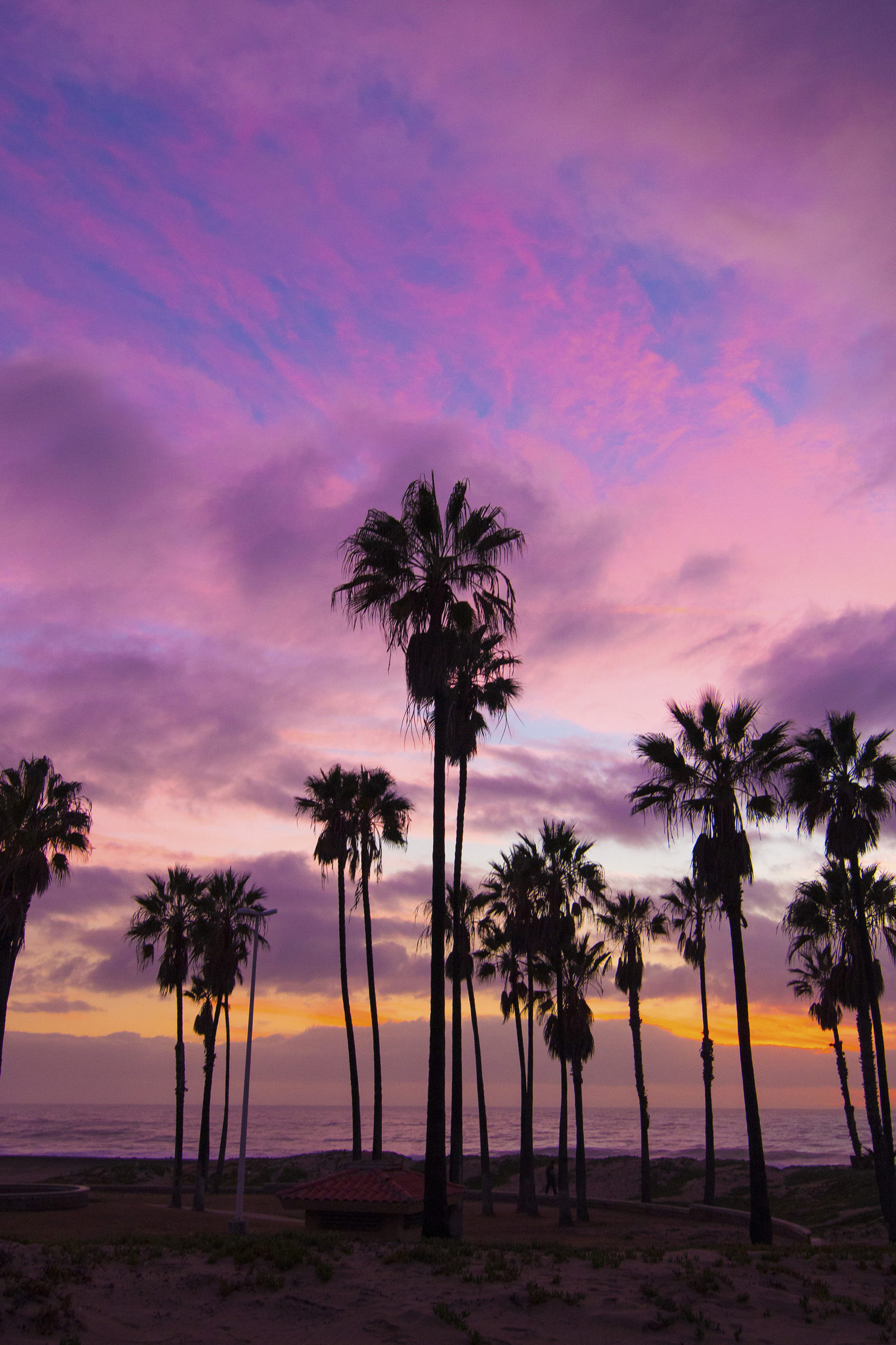 Pacific sunset with palms