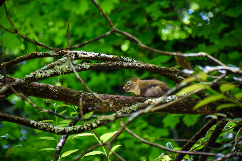 Tucked Within the Branches….