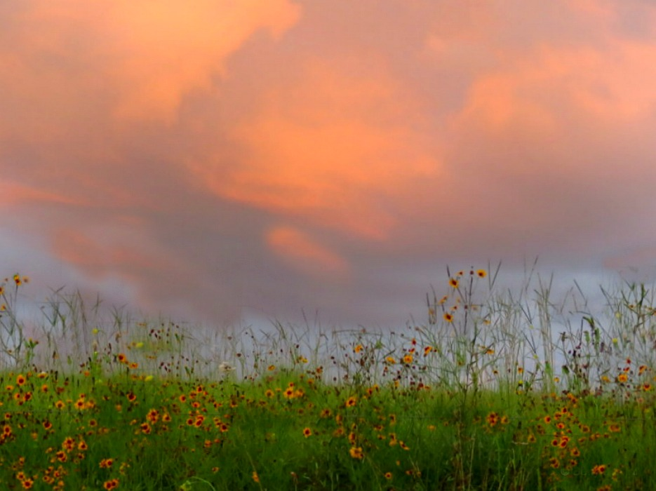 Storm Clouds over Wildflower Meadow~