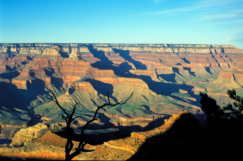 Grand Canyon Snag