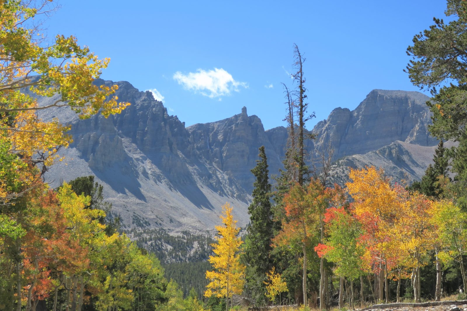 Great Basin Fall Foliage