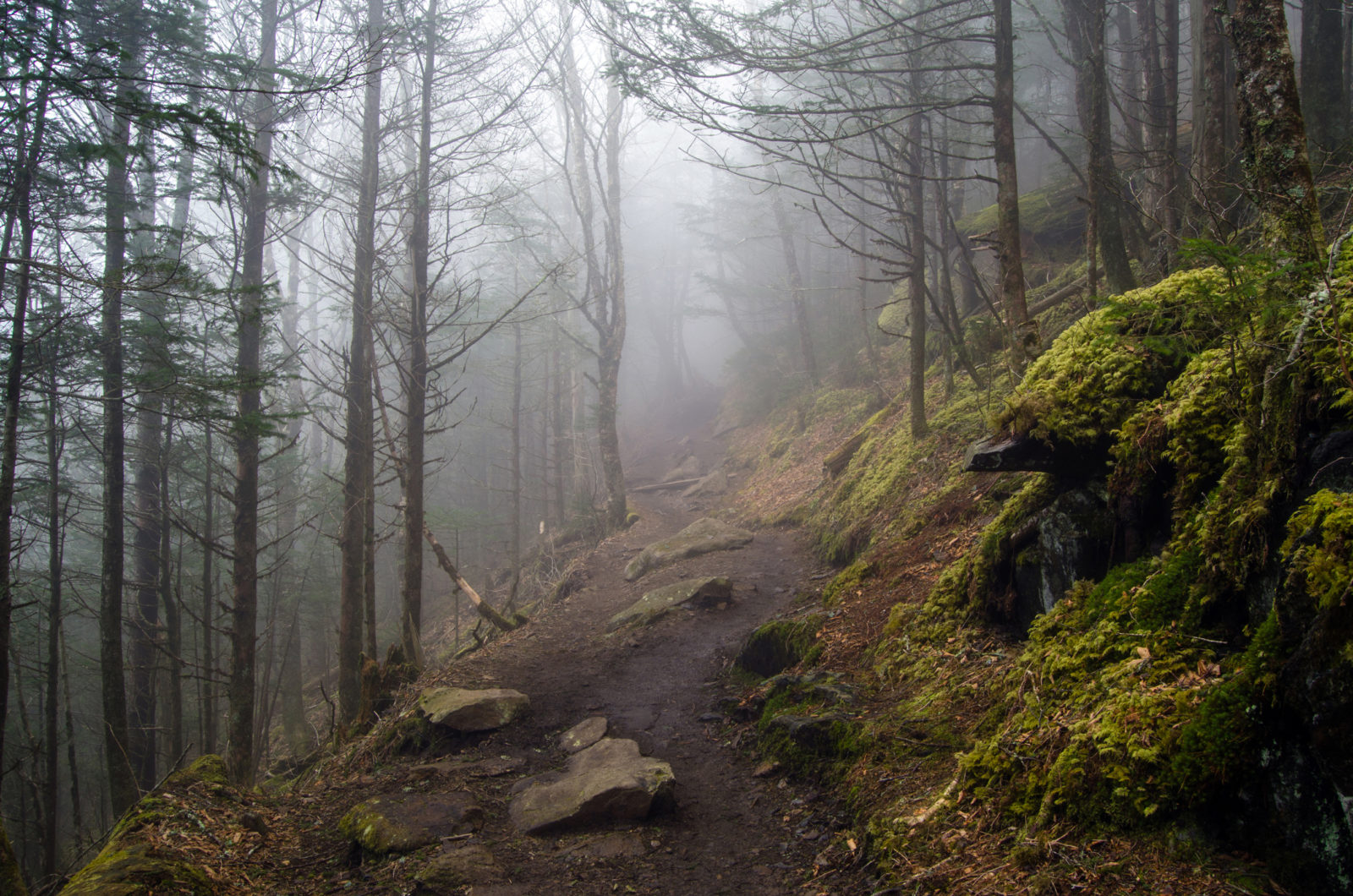 Foggy View Along the Appalachian Trail
