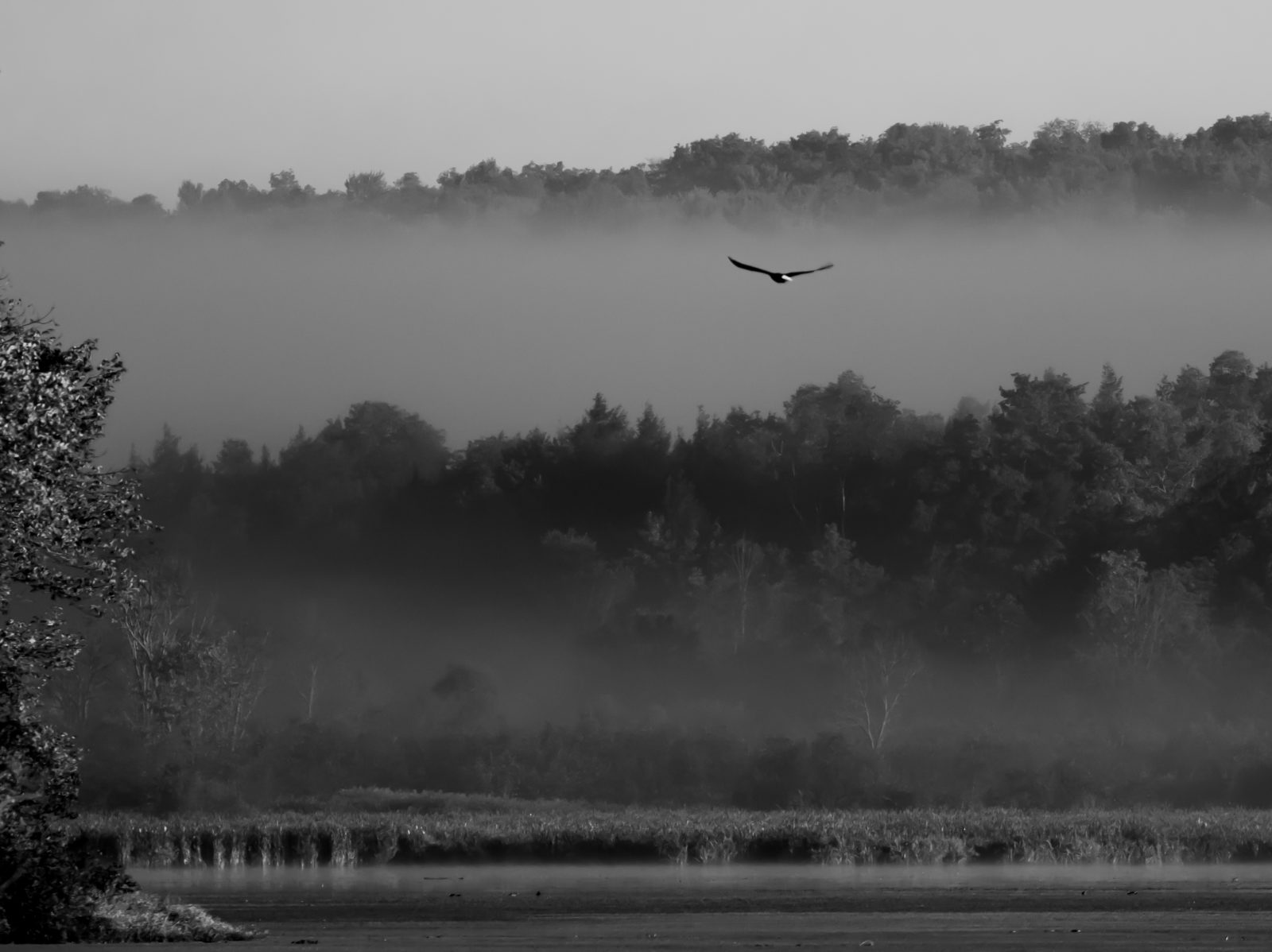 Eagle into the mist