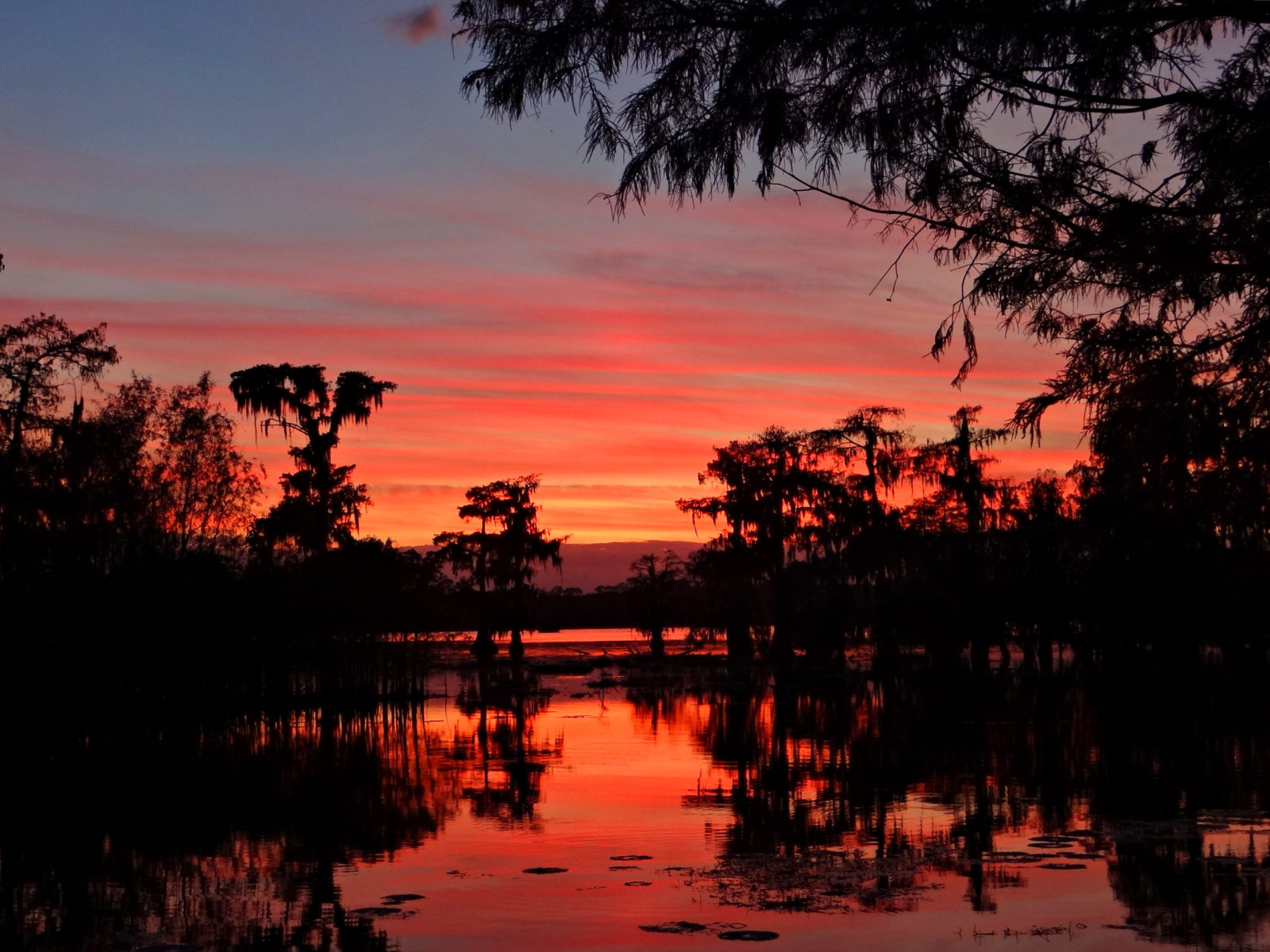 Louisiana Swamp Sunset