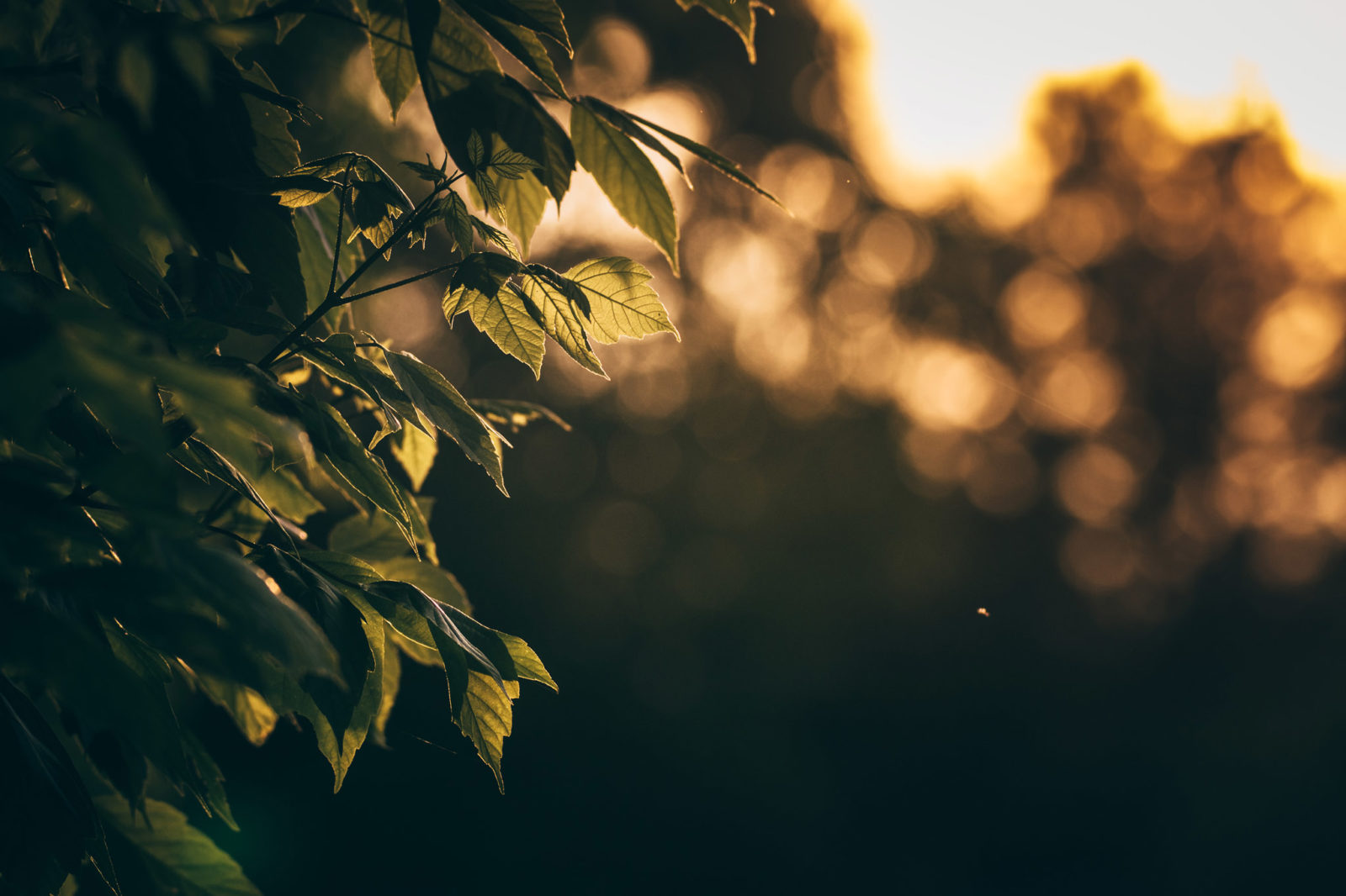 leaves in afternoon light