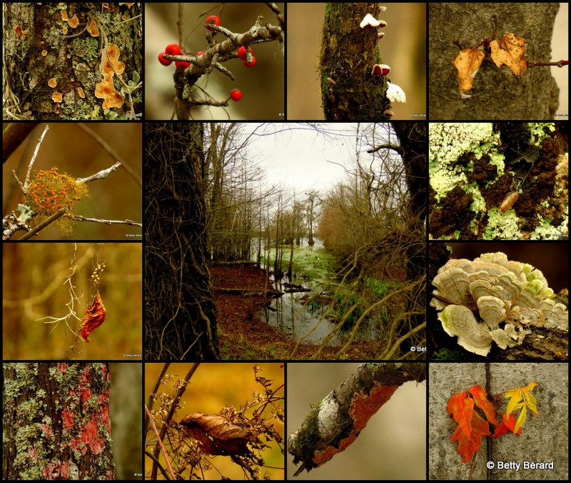 Fall Textures Collage