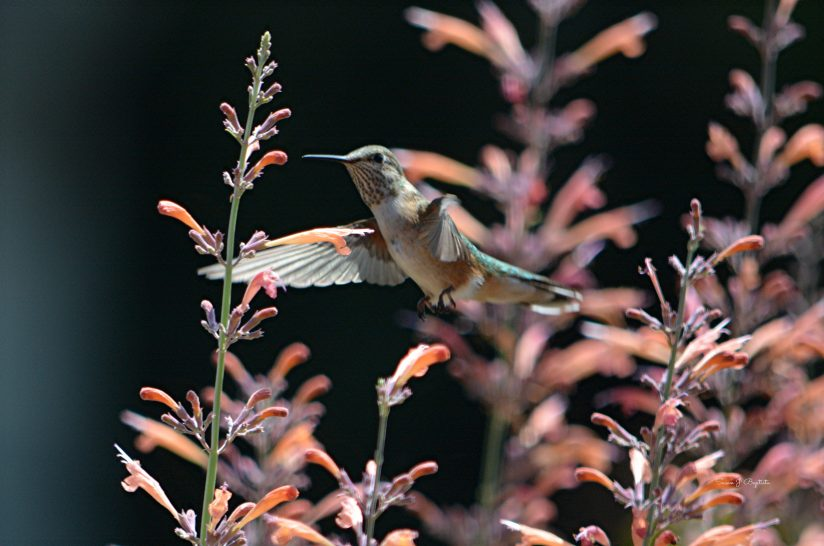Natural Hummingbird Feeder
