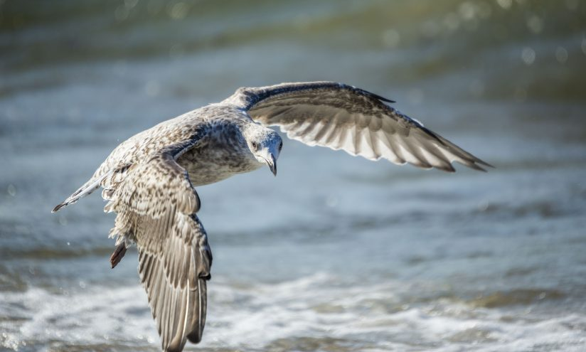 The gull in troubled waters
