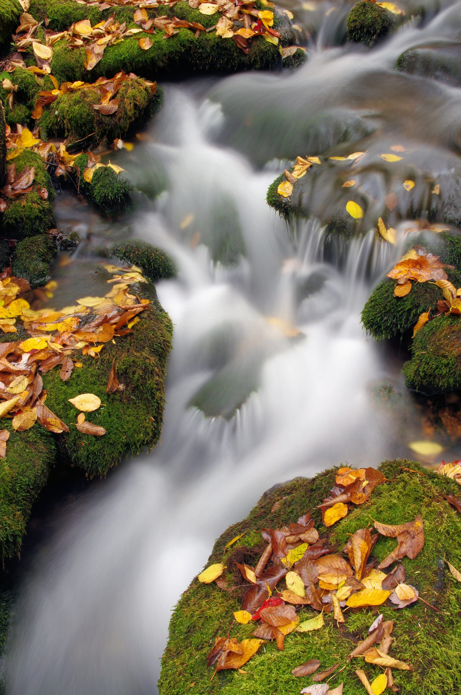 Falling Leaves and Water